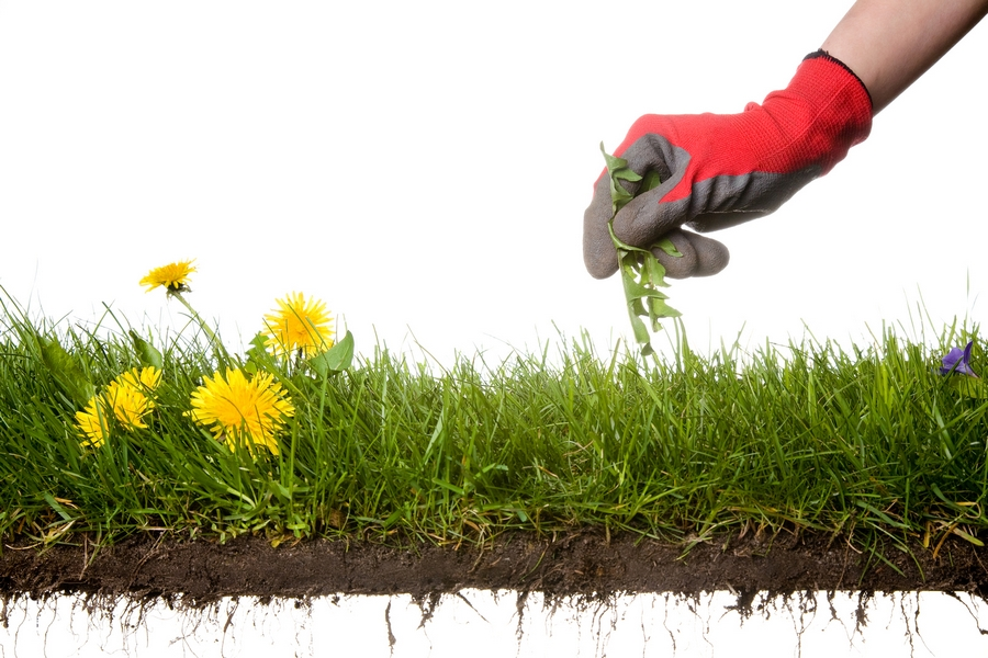 Why You Should Hire a Professional to Help With Weed Control